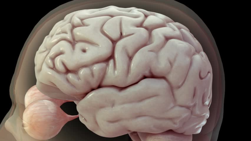 Realistic 3D anatomical model showing central nervous system including brain and eyes and then transitioning to high zoom of electrical activity via neurotransmitters and action potentials | Shutterstock HD Video #3061921