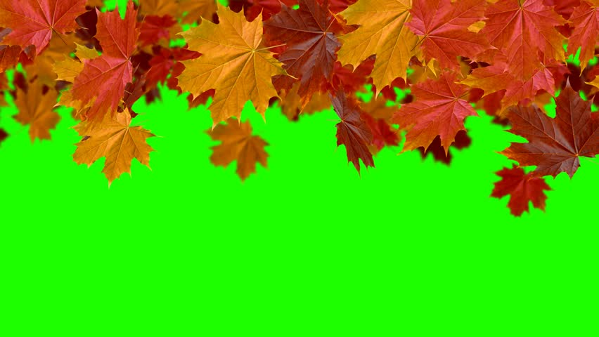 Falling Leaves Transition Stock Footage Video 100 Royalty Free 30619429 Shutterstock