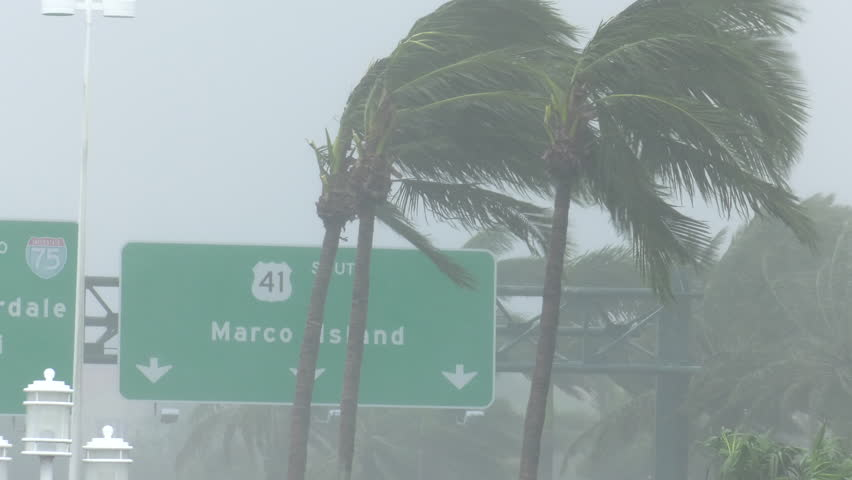 Naples, FL/US - September 10, 2017 [Hurricane Irma making landfall in Naples / Marco Island area of southwest Florida. Hurricane force winds blow palm trees with highway signs in background. ]