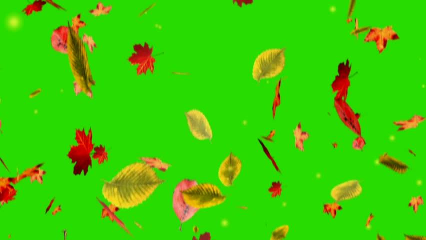 Falling Leaves On Green Screen Stock Footage Video 100 Royalty Free 3084157 Shutterstock