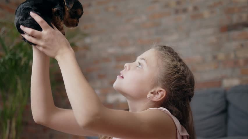 Little girl playing with yorkshire terrier puppy #30869995