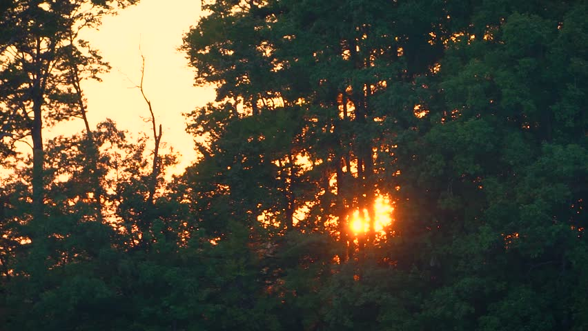 A view of a setting sun through a forest canopy.   Shutterstock HD Video #30987544