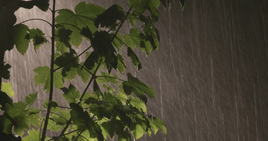 rainy night, strong rain falls, storm, 4K resolution night, dark landscape with rain, hard rain, leaves with raindrops