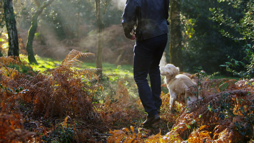 A man is exercising his dog in the forest in the beautiful early morning light.  Slow motion