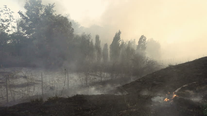 After the forest fire: smoke, disaster,desolation- slow motion   Shutterstock HD Video #31089877