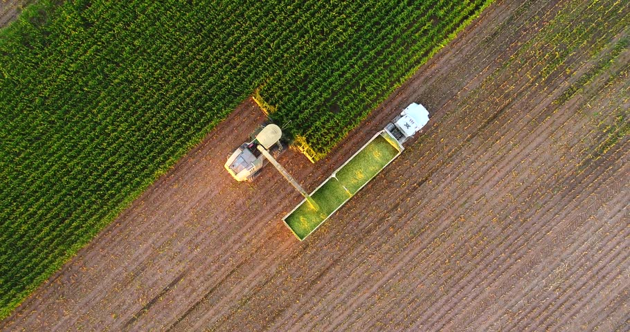 Tractors and farm machines harvesting corn in Autumn, breathtaking aerial view.