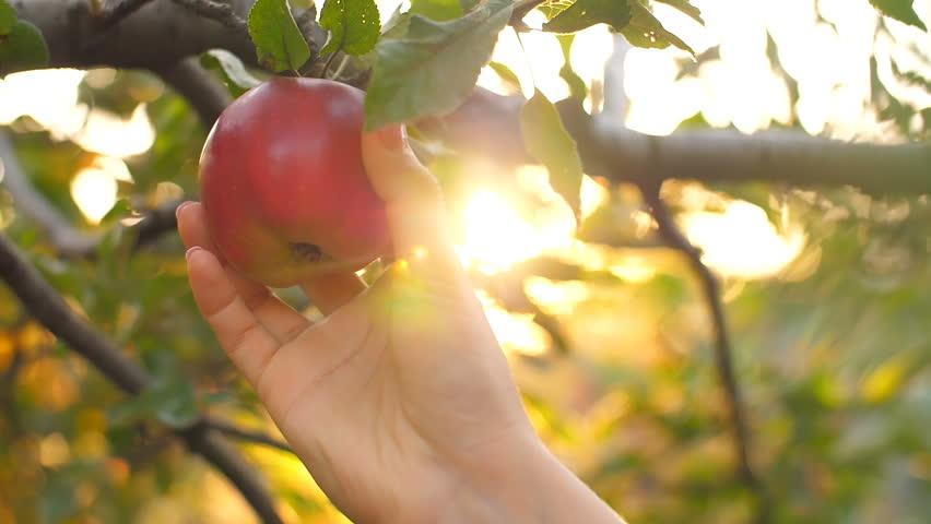 Picking an Apple