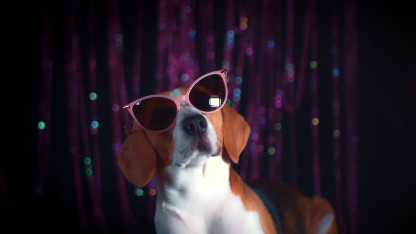 4k Funny Dog and Boy Posing with Sunglasses | Shutterstock HD Video #31176184