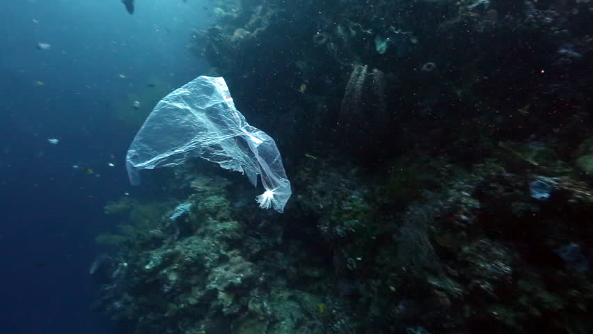 Plastic bag floating past coral reef wall underwater at Bunaken Island, Indonesia #31183792