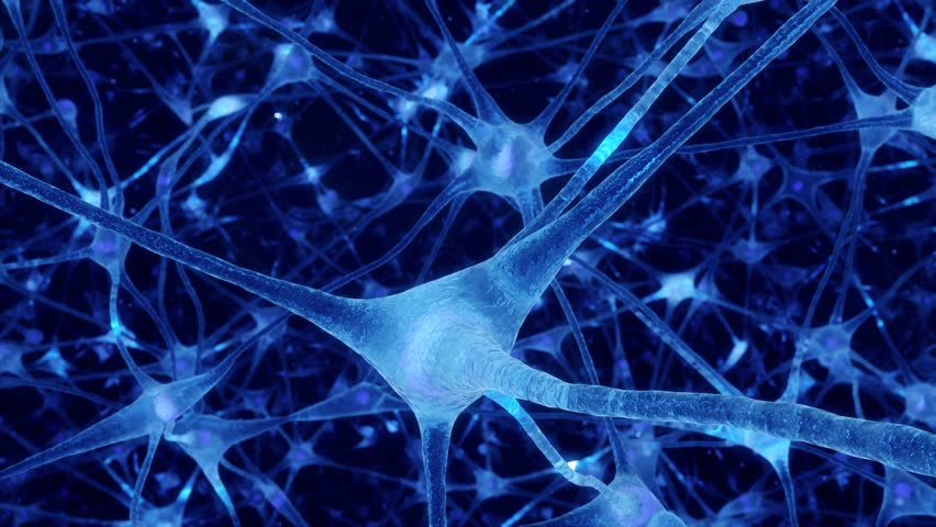 Neuronal and Synapse Activity animation. Electrical impulses inside the human brain. Blue. | Shutterstock HD Video #31222525