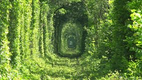 Unique Natural Tunnel of Love with Railway Road formed by Trees in Ukraine. Full HD 1920x1080 Video Clip
