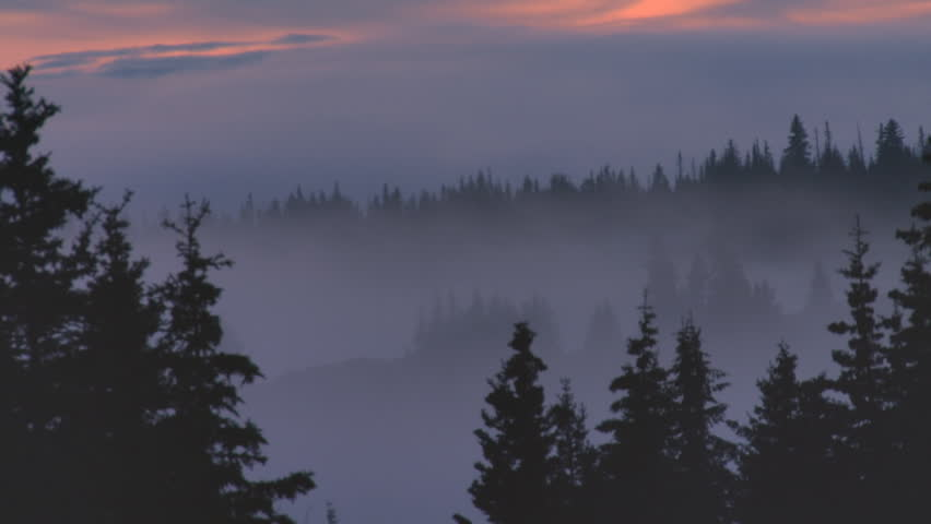 Spooky Dark Mist Forest