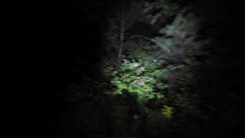 Wandering lost through the woods at night. Lost in the dark with only flashlight to light the way in scary forest on Halloween. Escaping in the bushes in the dead of night.