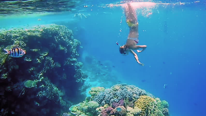 Beautiful woman dive underwater in snorkeling diving mask into clear blue sea water. Tropical underwater reef diving. Woman with a good figure slow motion shot. | Shutterstock HD Video #31430122