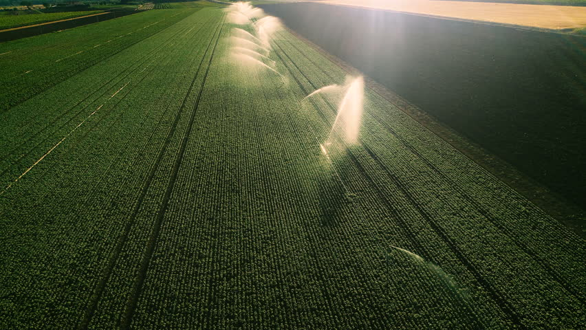 Aerial Shot of the Green Fields Being Irrigated with Sprinklers. Large Scale Industrial Farming. Beautiful Sunny Weather. Shot on Phantom 4K UHD Camera.