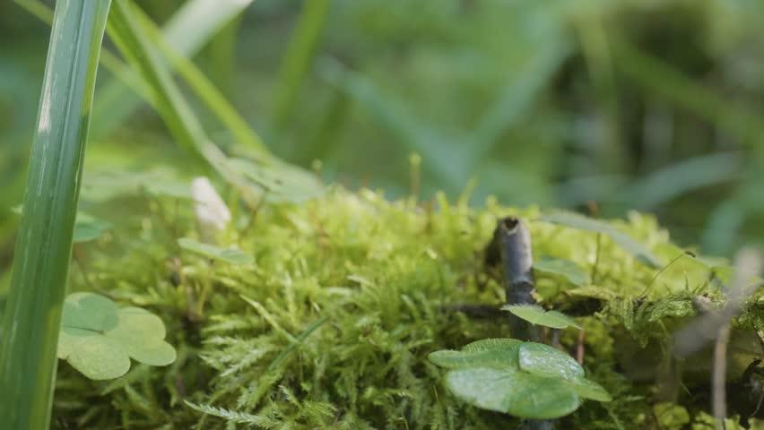 Moss grass forest. Beautiful green moss in the sunlight, moss closeup. Moss grows on the tree