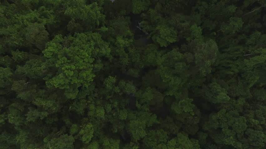aerial shot of a stream in tropical forest #31504687