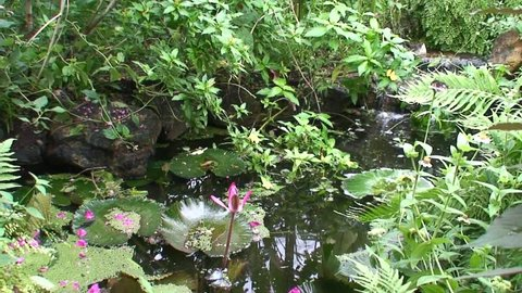 Lush Lilypond Garden and Waterfall