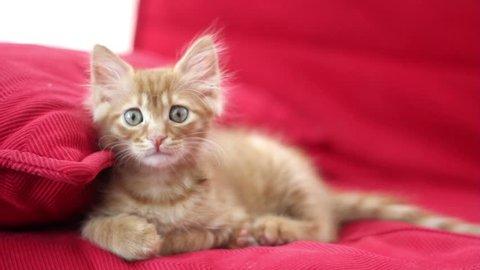 Playful Cute Cat