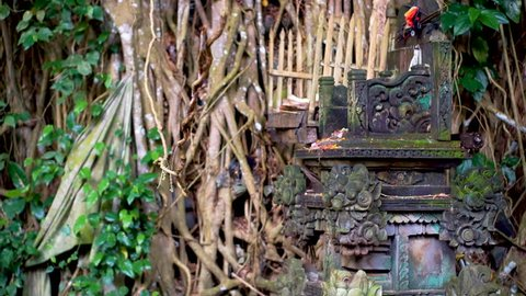 Liana is swaying in front of the ritual house of spirit. This is traditional balinese altar with the gifts for the gods, Bali, Indonesia