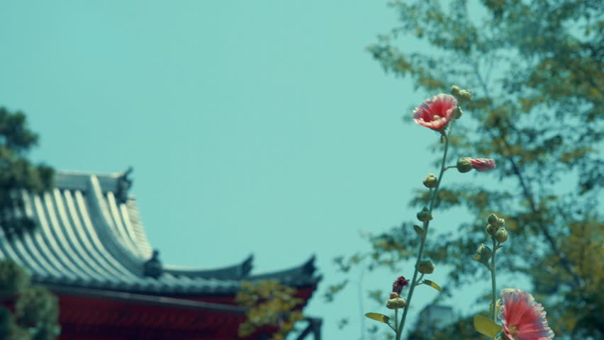 Ueno Park - Kiyomizukannondo and flowers | Shutterstock HD Video #31767469