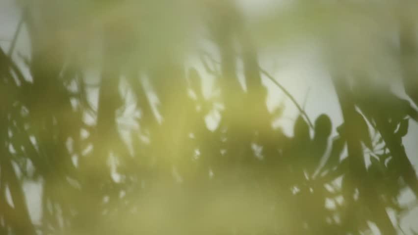 Shadow of leaves on water #31769701