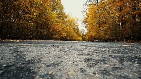 leaf fall in the autumn forest on the road