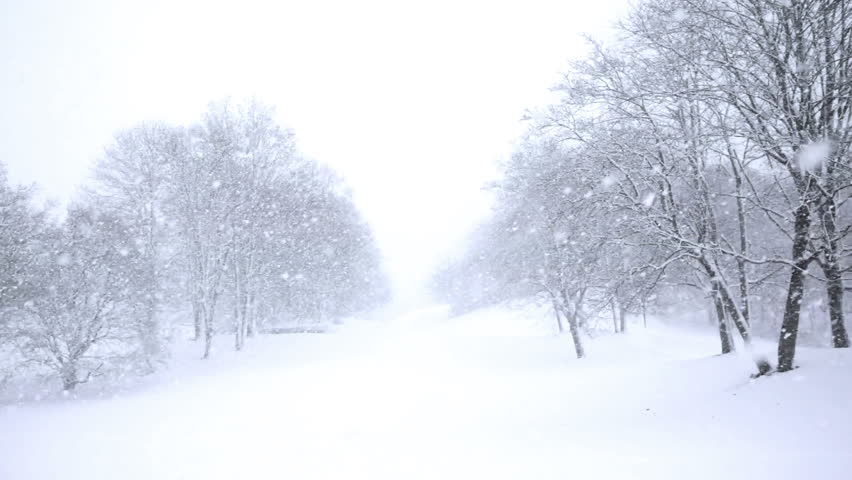 Falling snow in a winter park with snow covered trees, slow motion, filmed at 60p | Shutterstock HD Video #3178855