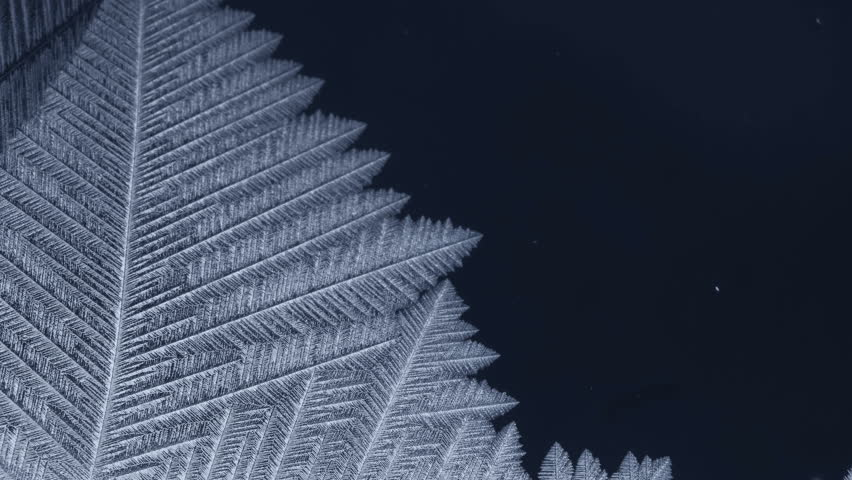 Freezing pattern covering the dark background. For Christmas and New Year Holidays exclusive backdrop. 4K high quality footage. | Shutterstock HD Video #31831312