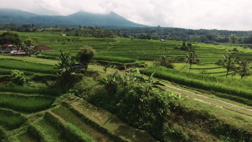 Aerial video in an amazing landscape, with drone, above rice terraces with a girl riding her bike on a beautiful day.  Shot in Bali, Indonesia. | Shutterstock HD Video #31855933