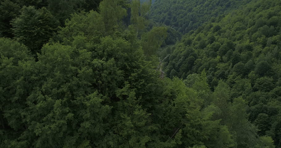 Aerial View. Flying over the beautiful mountain River and beautiful forest. #31893250