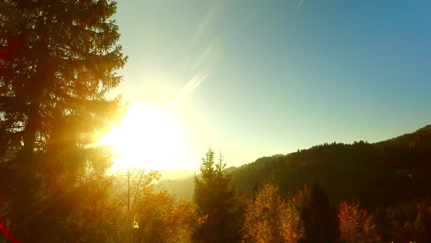 Last rays of a sun, shinning through spruce forest in the afternoon, before darkness arises. Autumn time. Autumn weather. #31935439