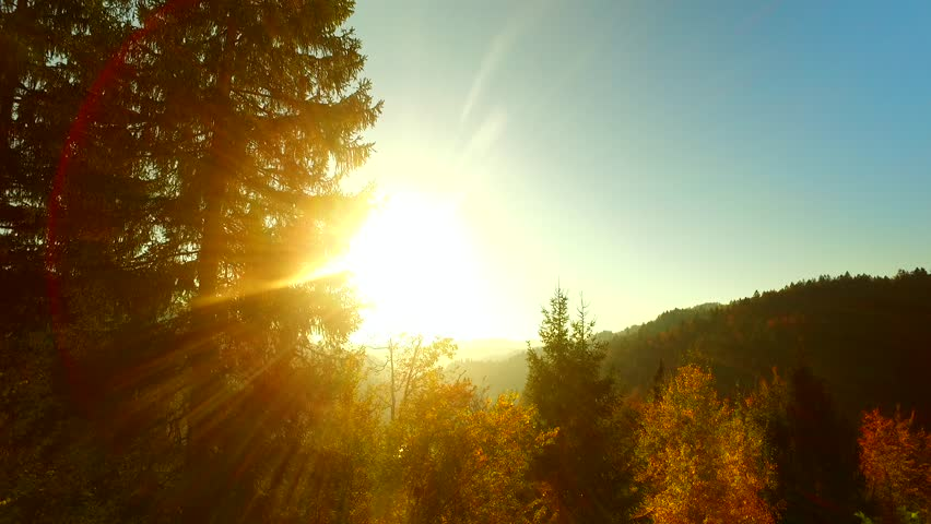 Last rays of a sun, shinning through spruce forest in the afternoon, before darkness arises. Autumn time. Autumn weather. #31935445