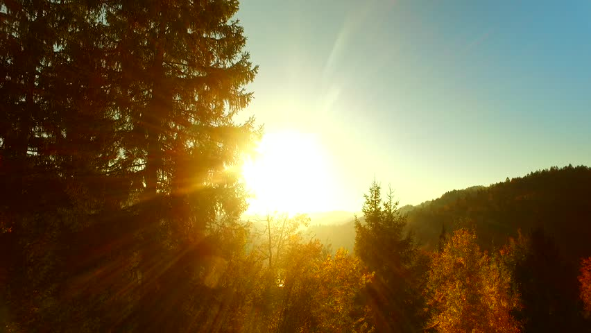 Last rays of a sun, shinning through spruce forest in the afternoon, before darkness arises. Autumn time. Autumn weather. | Shutterstock HD Video #31935475