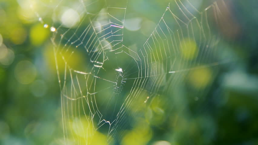 Spider's web on the branches in the garden | Shutterstock HD Video #31940773