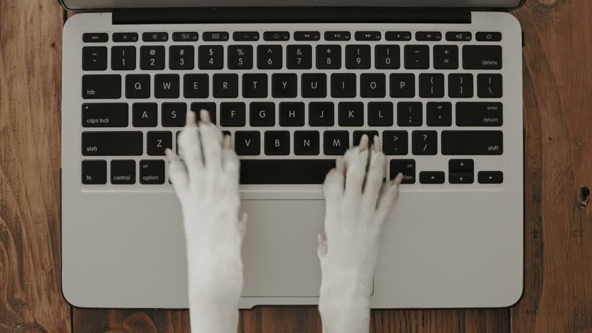 Funny and silly playful video of dog paws typing and pressing buttons on laptop keyboard nervously and rapidly. concept joke or freelance work in office, pet life and routine workplace