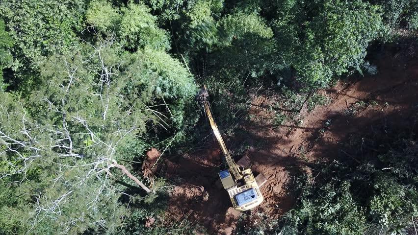 Deforestation. Logging. Environmental problem - destruction of rainforest in Thailand