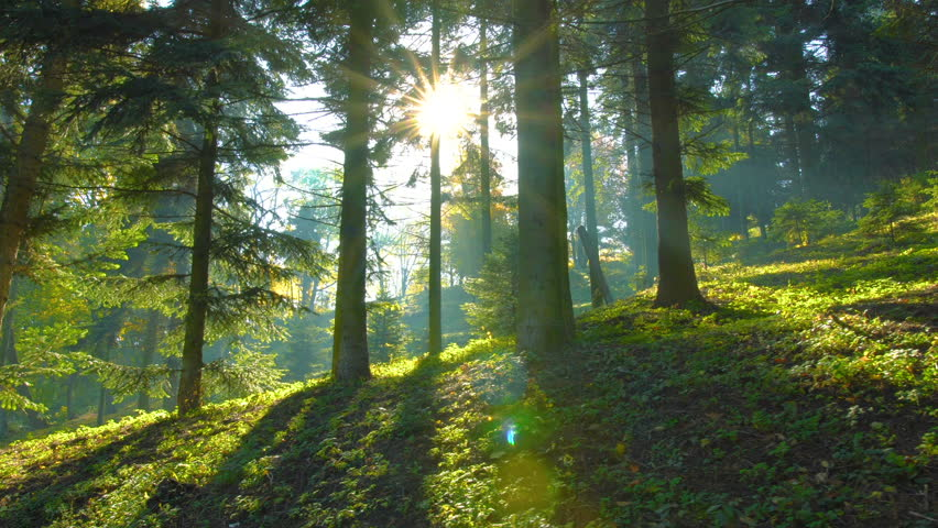 Magical mountain forest with the trees growing on hills . Warm sunbeams illuminating the trunks and lovely plants. Gimbal shot with parallax effect.