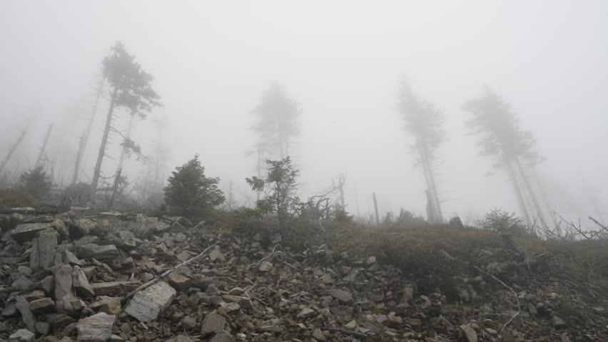 Trees on a slope in heavy fog   Shutterstock HD Video #32149858