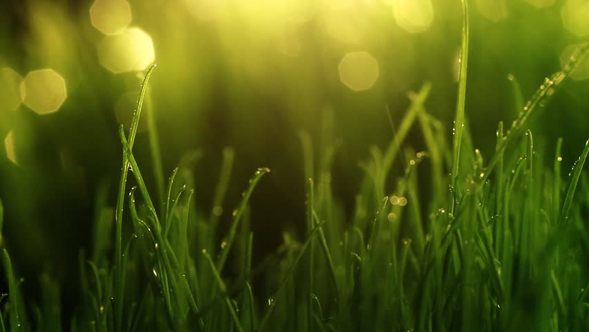 Close-up shot of green grass with rain drops. Bokeh on background. Camera moves using slider.