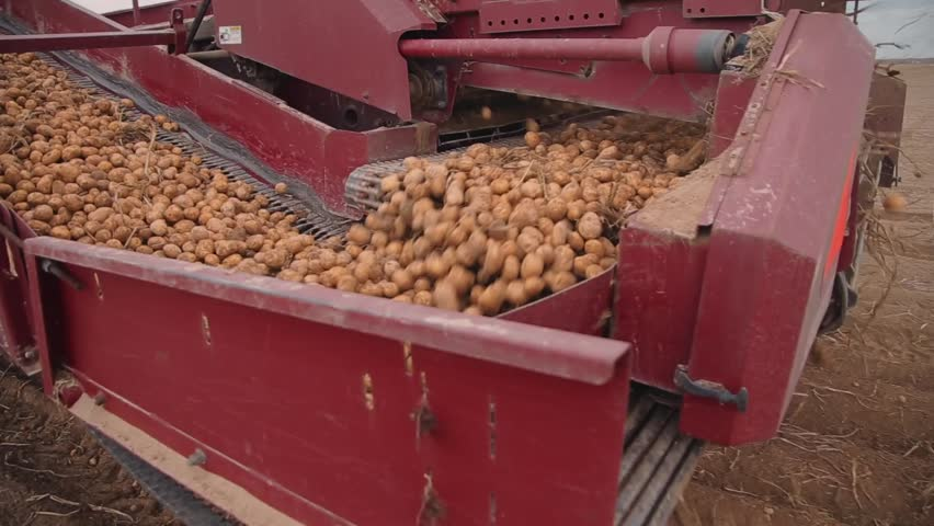 Potatoes on the conveyor potato harvester | Shutterstock HD Video #32299423