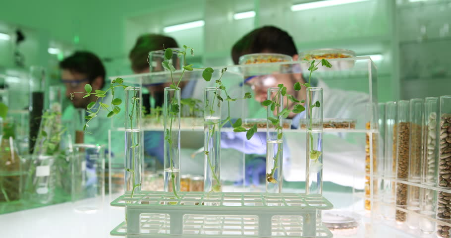 Food Science Biologists Working in Lab Group Examining Plants Seeds Laboratory | Shutterstock HD Video #32388022