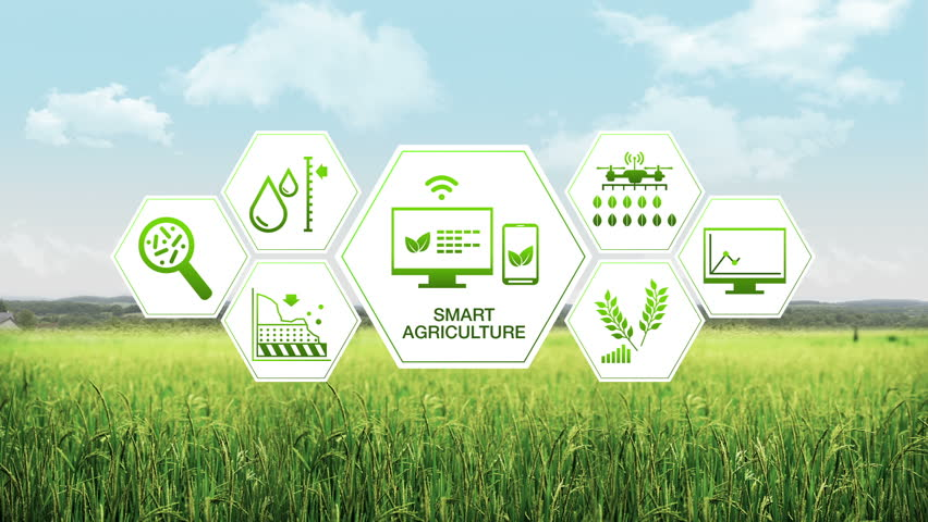 Smart agriculture Smart farming, hexagon information graphic icon, internet of things. 4th Industrial Revolution.1. Royalty-Free Stock Footage #32394631