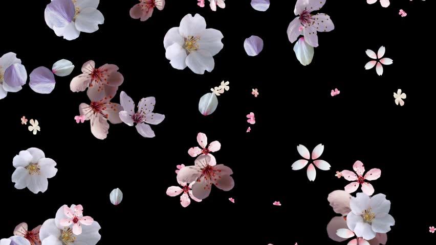 Beautiful Pink White falling down | Shutterstock HD Video #3256966
