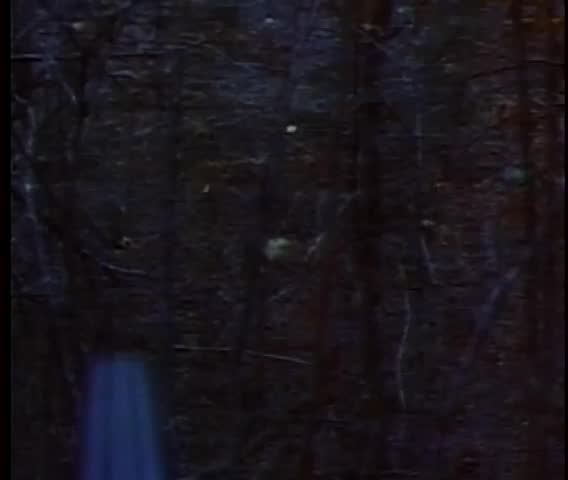 Point of view shot of gun firing into woods | Shutterstock HD Video #3263419