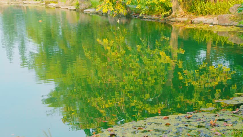 Lake and tree reflection   Shutterstock HD Video #32663494