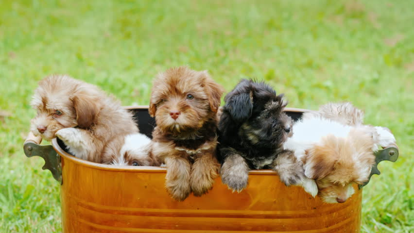 Little defenseless puppies are sitting in a large bucket. Buy yourself a pet concept
