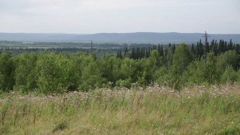 Russian wild forest in the summer