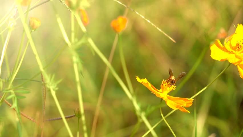 Slow motion bee flying on beautiful flower garden in morning sunrise | Shutterstock HD Video #32748631
