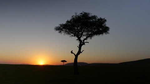 Gimbal shot of a sunrise in the plains of Maasai Mara National Reserve, Kenya, Africa